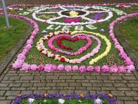 Blumenteppich_Rannungen_1
